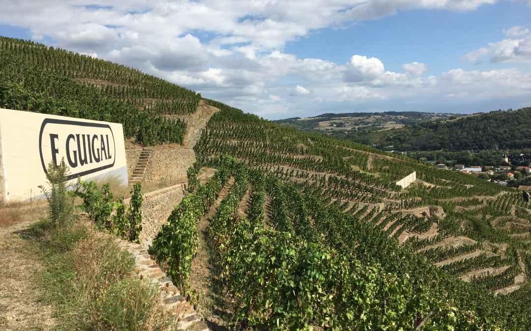 Les crus mythiques de la Vallée du Rhône