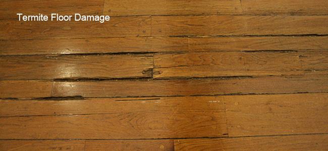 floor-damage-termite-infestation