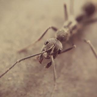 Florence pest control