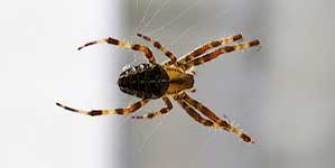 Commercial Spider Control