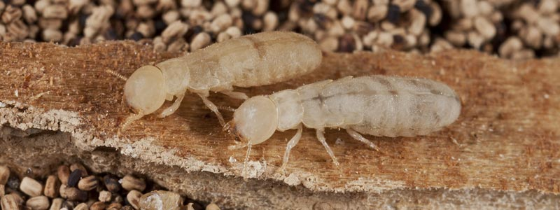 Quality Termite & Pest Control Services