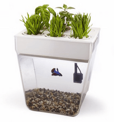 Image showing the aquaponics Water Garden from Back To The Roots