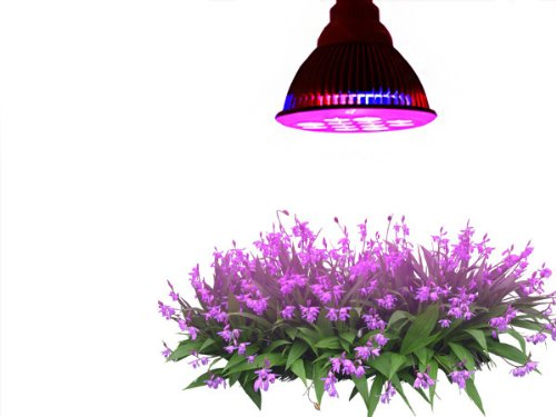 TaoTronics Led Grow Light Bulb Review (TT GL20, TT GL22, TT GL23)