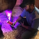 Red and Blue Light Animal Therapy
