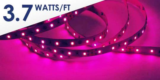 Pink LED Strip HH-S2835P-60-24-5M-PINK