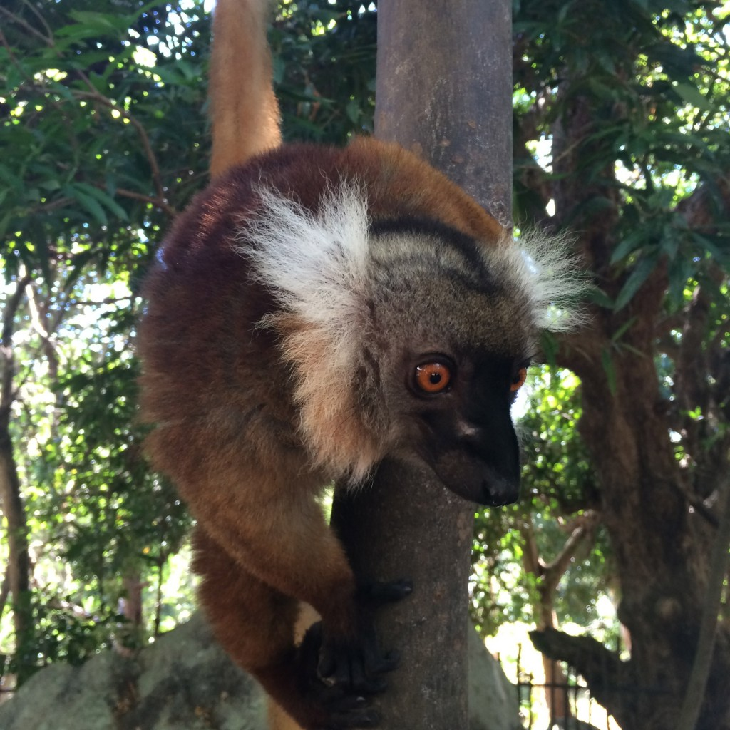 5 Awesome Things to do in Nosy Be Madagascar