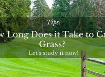 Tips: How Long Does it Take to Grow Grass - Let's study it ...
