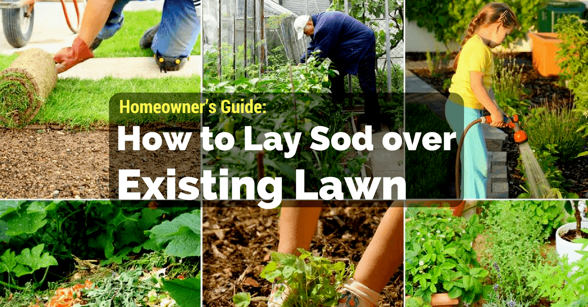 How to Lay Sod over Existing Lawn Homeowners Guide 2018