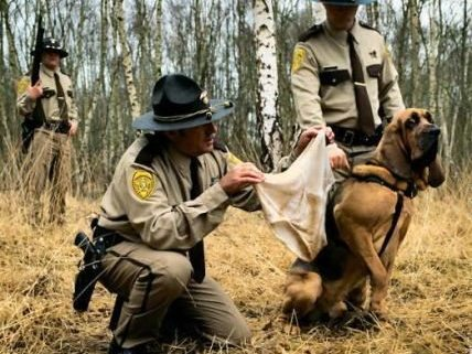 Homicide investigations