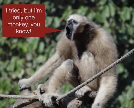 just a monkey