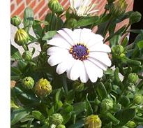 bloemetje