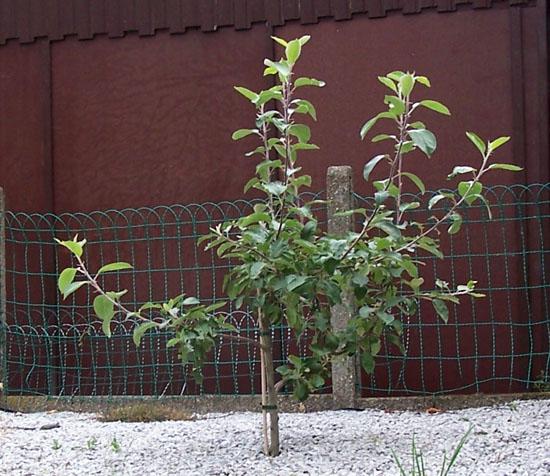 appelboom02