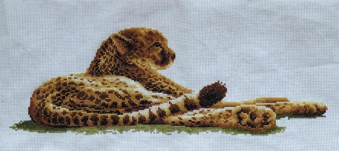 luipaard01