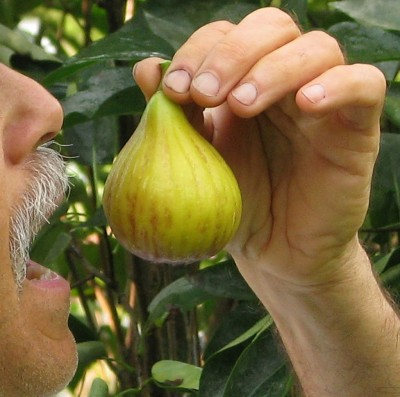 Me eating one of my figs