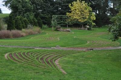 Rye cover crop at Chanticleer Garden