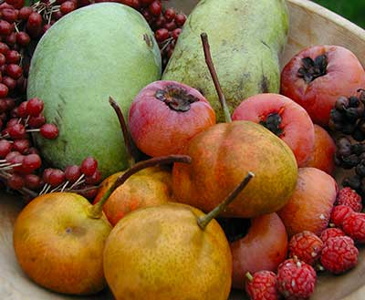 autumn uncommon fruit