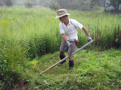 Scything the meadow.