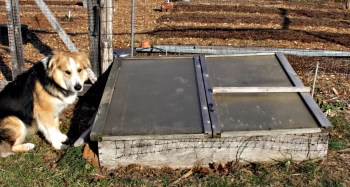 Cold frame with cover closed, and Sammy