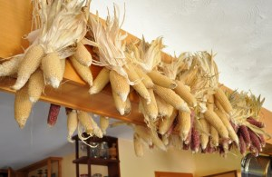 Popcorn hanging from rafters for winter