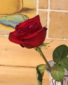 Commercial rose, after 2 weeks