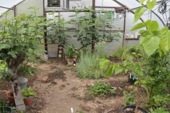 Greenhouse in June