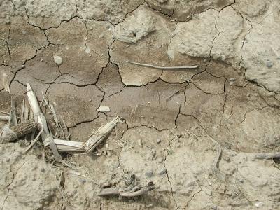 Bare, cracked soil