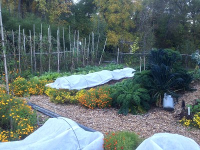 Row covered vegetables