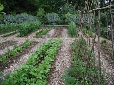 My garden's beds