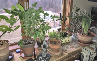 Houseplants, office window