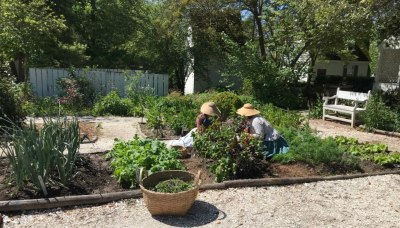 Colonial vegetable gardeners at work