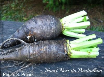 Turnip Noir de Pardailhan
