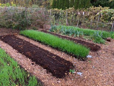 Tidy vegetable garden beds