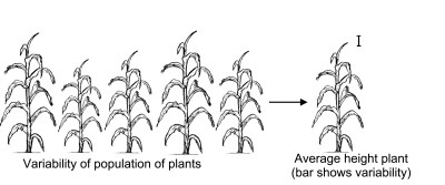 Variability in plant populations