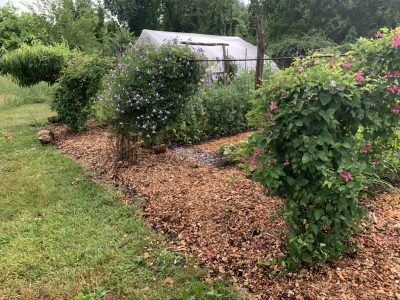 Asparagus bed with compost and chips