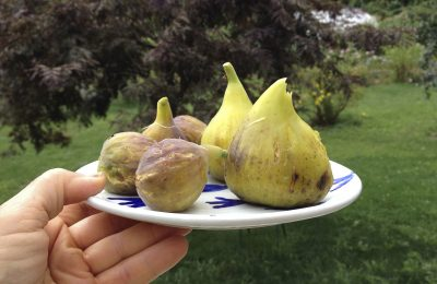 Some figs on a plate