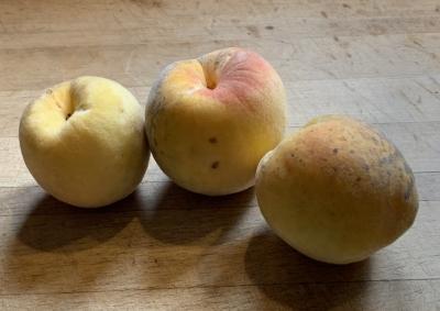 Wendy's peaches