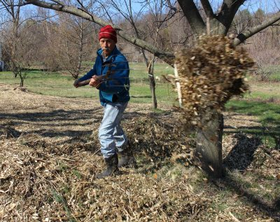 Woor chip mulching