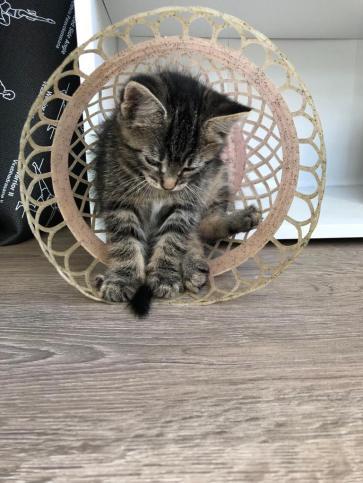 diego the cat cozy mystery