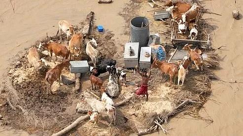 Distribution de vivres et de matériels à un sinistré pakistanais.