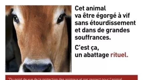 """Résultat de recherche d'images pour """"certification halal décret français"""""""