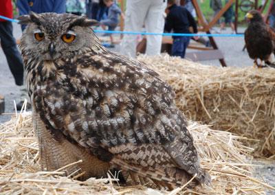 Owl in St Jean de Sixt, France