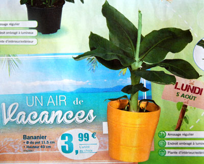 <Photo of banana plants for sale in the French Alps supermarket catalogue>