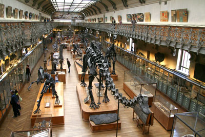 <Photo of the dinosaur floor at the Natural History Museum of Paris, France. Copyright Le Franco Phoney, Le Grand Bornand, Haute Savoie>