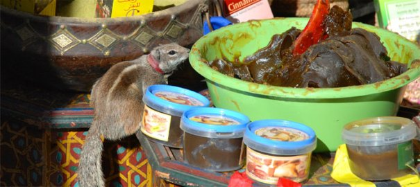 <Photo of a pet chipmunk at a souk in the Medina of Marrakesh>