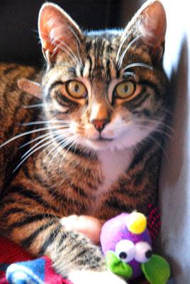 <Squeak the cat from La Clusaz>