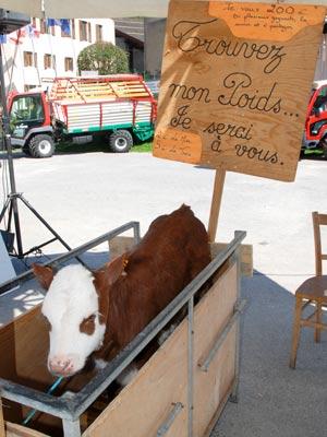<Photo of a calf for sale in La Clusaz, France'>