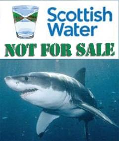 scotlands water shark