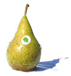Conference pear with Tory logo