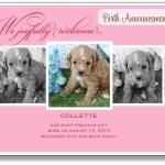 Puppy Announcements