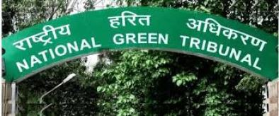 Submit report on fuel adulteration in 4 weeks: NGT